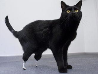 gatto_bionico